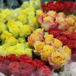 The language of roses – Valentine's Day meanings
